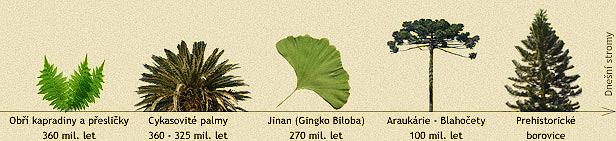 Vývoj rostlin